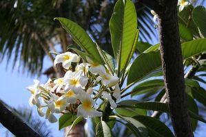 Lista de plantas tropicales