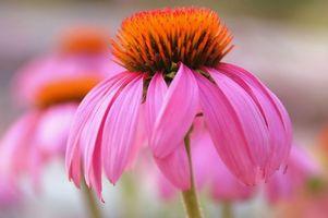 Flores resistentes a la planta al aire libre