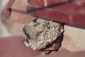 Formas naturales para quitar el papel de las avispas