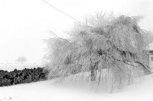 Los efectos del clima frío en el ambiente físico