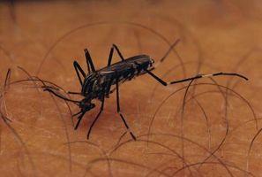 Cómo matar larvas de mosquitos con lejía de uso doméstico o vinagre