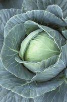 ¿Cómo hacer crecer la col y Verduras