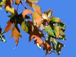 Datos sobre el estado del árbol de Wisconsin