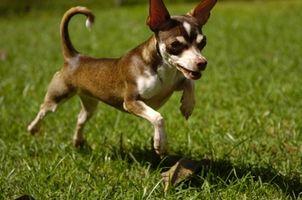 Remedios caseros para la Obtención de mascotas manchas y olores de la alfombra