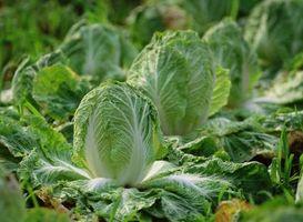 Cómo utilizar peróxido de hidrógeno para disuadir a las plagas en un jardín de verduras