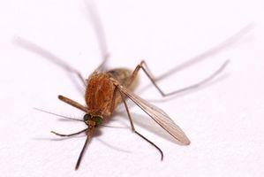 ¿Cómo me deshago de mosquitos en mi casa?
