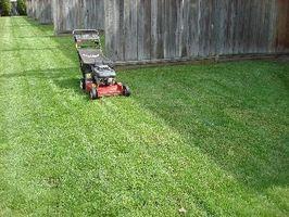 Los mejores Abonos para la hierba