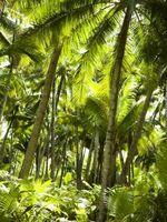 Las plantas inusuales Selva Tropical