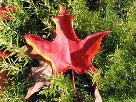 Consejos de eliminación de hojas