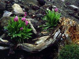 Datos acerca de plantas con flores