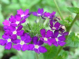 ¿Cuáles son buenas Plantas de interior?