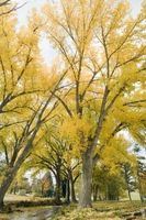 ¿Por qué las hojas del árbol se vuelven de color en el otoño?