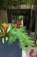 ¿Qué es una planta ornamental tropical?