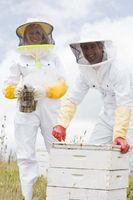 Cómo quitar las abejas de una casa a una jaula de abeja