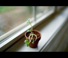 ¿Por qué tengo insectos como las liendres en mi Casa de las plantas?