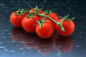 Lo que hace que las hojas amarillas en las plantas de tomate?