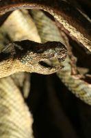 ¿Cómo deshacerse de las serpientes en un sótano