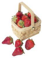 ¿Cuánto tiempo se tarda en crecer fresas Hydroponically?