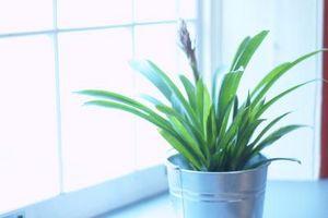 Vs. Agua Gris El agua del grifo de las plantas