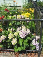 Flores para el patio trasero