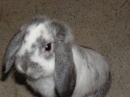 Cómo construir una jaula para conejos básico