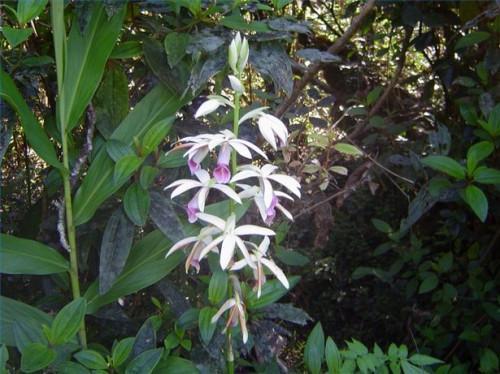Tipos de plantas de interior tropicales