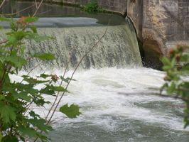 ¿Cuáles son los efectos de la contaminación del agua en las plantas?