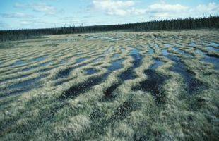 ¿Cómo afecta el musgo de turba maravillas?
