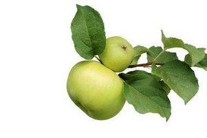 Datos acerca de los árboles de Apple Granny Smith