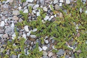 Cómo utilizar cloro para matar las malas hierbas en caminos de grava