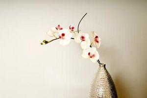 Orquídeas con hojas amarillas