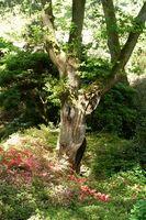 Las plantas anuales para un jardín semi-sombra
