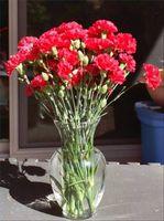 ¿El azúcar prolongar la vida de las flores cortadas?