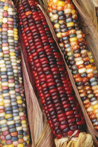 Profundidad de siembra de semilla de maíz indio