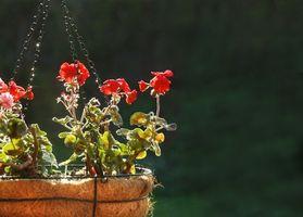 ¿Es el suelo Amend mezcla adecuada para la jardinería en macetas sin agregar la suciedad de la Gardn?