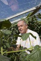 Factores para Mejorar la fotosíntesis en un invernadero