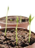 Las mejores luces para plantas que crecen