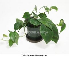 Cómo identificar los tipos de Plantas