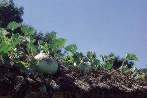 Cómo utilizar la seta del suelo como abono orgánico