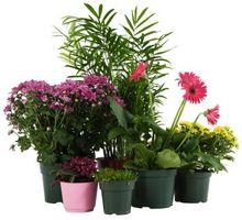 ¿Las plantas crecen mejor en suelos, fertilizantes o agua?