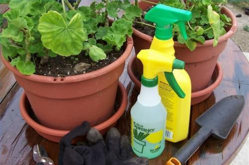 Cómo aplicar insecticidas Jabones