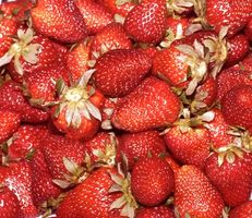 ¿Cómo cuido de una planta de fresa que cuelga?