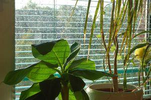 ¿Cómo crece Ayuda agua embotellada plantas?