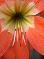Cuáles son las partes de las plantas con flores?