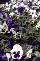 ¿Qué plantas pueden soportar un tiempo más fresco?