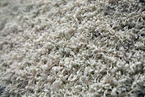 Cómo matar a los gusanos en su alfombra