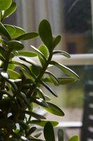 Los mejores fertilizantes líquidos para plantas de interior