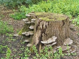 Remedios caseros para el árbol de raíz y Química Stump Removal