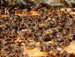 ¿Cómo deshacerse de las polillas de las colmenas