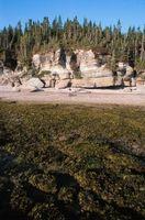Las algas puede ser usado como fertilizante en las palmeras?